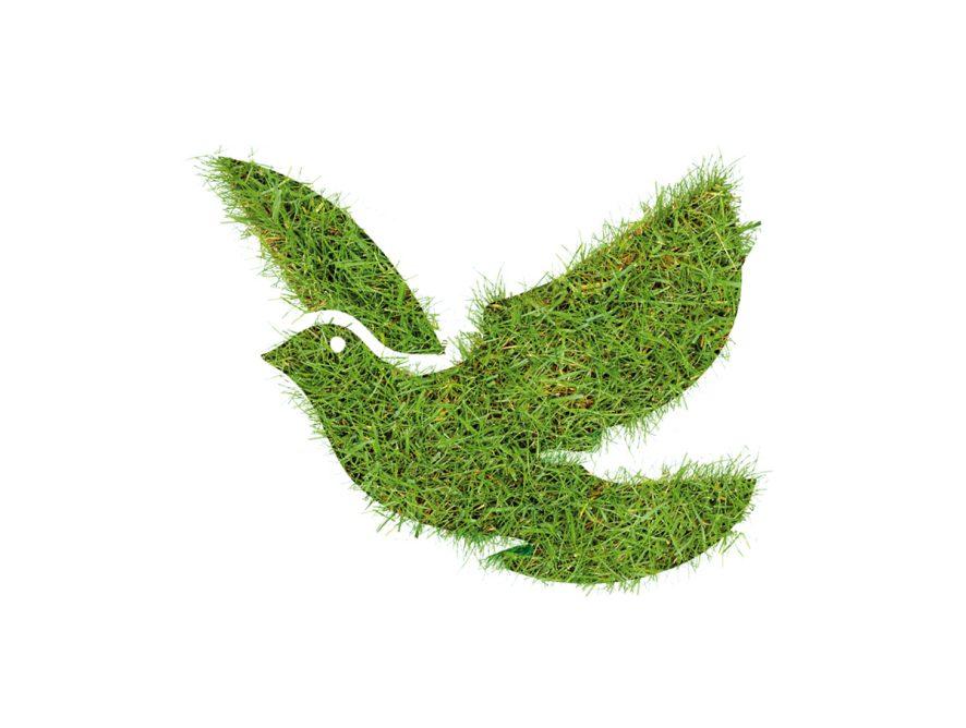 eco-comune-savona